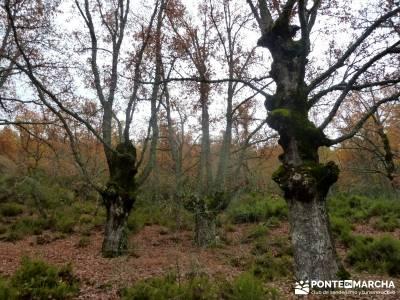 Molino Río Jarama-La Hiruela; viajes doñana álbum fotos camino santiago desde madrid